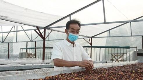 Phát triển bền vững cây cà-phê vùng Tây Bắc