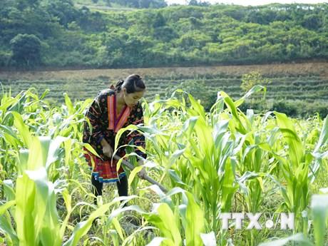 Nỗ lực vượt những thách thức lớn để xóa đói giảm nghèo bền vững