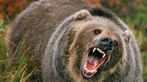 Bị gấu dí đuổi suýt bỏ mạng, người phụ nữ may mắn về được rồi 'ăn' ngay án tù: Chuyện gì kỳ lạ thế?