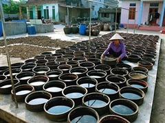 Đà Nẵng đầu tư xây kè chống sạt lở, bảo vệ Di sản văn hóa phi vật thể