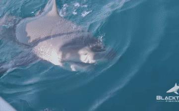 Chỉ câu cá giải trí cho vui, người đàn ông bất ngờ kéo lên cả một con... cá mập!