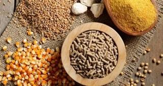 Giá tăng cao, nhập thức ăn gia súc và nguyên liệu sớm vượt 4 tỷ USD