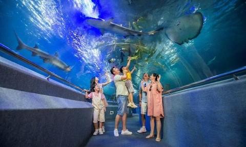 'Cánh cổng thần kỳ' bước vào thế giới đại dương kỳ bí