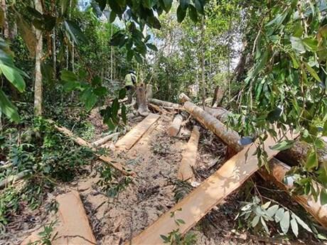 Vụ phá rừng ở Bình Thuận: Điều tra nguyên giám đốc công ty lâm nghiệp
