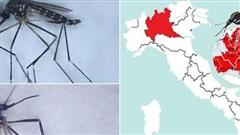 Muỗi ngoại lai từ Đông Á có thể là vật trung gian truyền bệnh và virus tại Italy