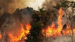 Chính quyền Syria tử hình 24 người đốt rừng