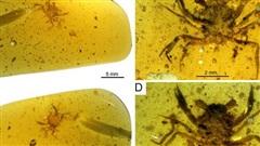 Hoảng hồn gặp sinh vật hiện đại bị hóa thạch từ 100 triệu năm trước