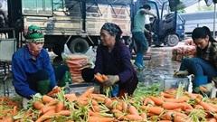 Bảo đảm nguồn cung nông sản chất lượng cho thành phố Hà Nội