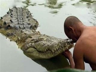 Kỳ lạ con cá sấu 'ăn chay', chưa từng nếm thịt và tấn công người