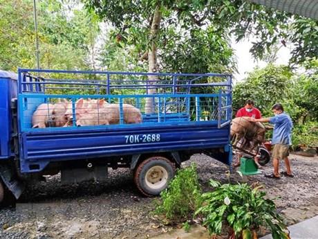 Dự báo giá lợn hơi xuất chuống thời gian tới sẽ tiếp tục tăng