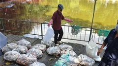 Cá chết hàng tấn bốc mùi quanh hồ cảnh quan ở TP.HCM