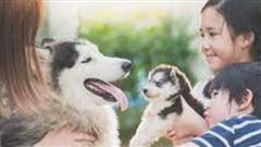 Bác sĩ bày cách vẫn có thể nuôi thú cưng dù bị viêm mũi dị ứng