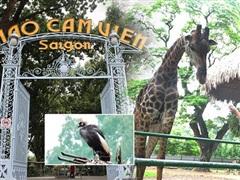 Thảo Cầm Viên Sài Gòn vượt qua khó khăn, sẵn sàng đón khách trở lại