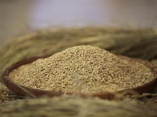 Xuất khẩu gạo của Thái Lan dự báo tăng nhờ đồng baht yếu đi