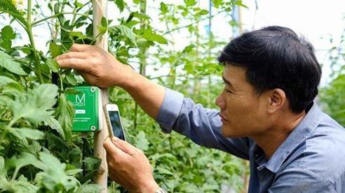 Nhiều địa phương tăng chuyển đổi cây trồng trên đất lúa
