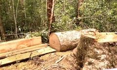 Khởi tố trạm trưởng và 2 nhân viên bảo vệ rừng khu bảo tồn