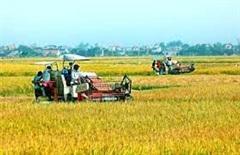 Dự kiến mở rộng địa bàn bảo hiểm nông nghiệp
