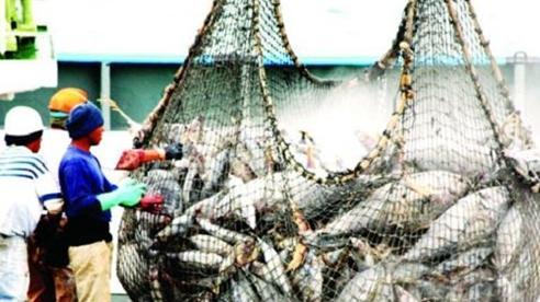 Khai thác phải song hành với bảo tồn nguồn lợi thủy sản