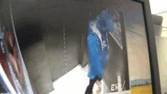 Shipper đi tiểu trong thang máy chung cư gây sốc