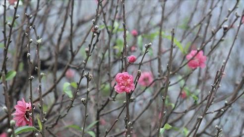 Giờ đẹp, hướng đẹp xuất hành đón tài lộc ngày mùng 1 Tết Tân Sửu