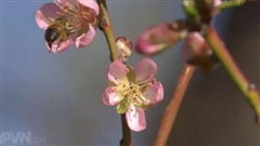 Mùa xuân gọi