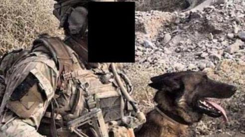 Số phận bất ngờ của những chú chó chiến đấu 'hết đát' trong quân đội Anh