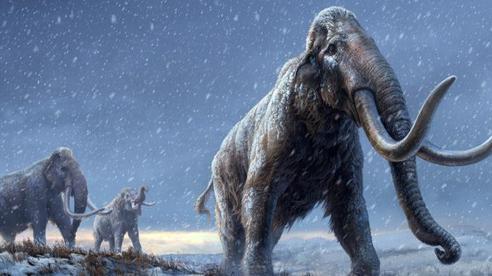 DNA cổ nhất thế giới - 1,2 triệu năm tuổi - tiết lộ 'sự trỗi dậy' của loài voi ma mút khổng lồ