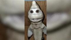 Ngư dân hoảng sợ khi bắt được cá mập có 'khuôn mặt người'