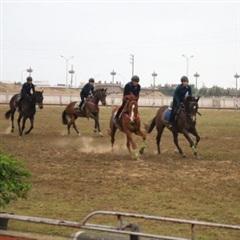 Hà Tĩnh có câu lạc bộ cưỡi ngựa thể thao đầu tiên