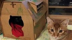 Mất nửa ngày mới làm xong nhà mới cho mèo cưng, chủ nhân giận 'tím mặt' khi chứng kiến cảnh tượng này