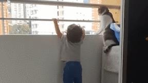 Khoảnh khắc chú mèo kiên quyết ngăn em bé đu bám vào song sắt ban công