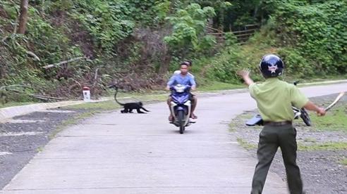 Đàn vọoc xông ra đường tấn công, nhiều người bị cắn