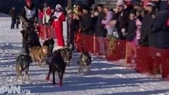 Cuộc thi chó kéo xe trượt tuyết ở Nga