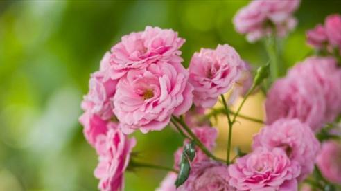 Tử vi ngày 29/3/2021: Tuổi Thìn tài lộc tăng tiến, tuổi Hợi đào hoa nở rộ