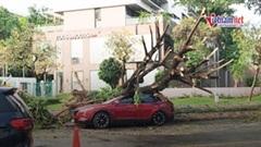 TP HCM:Mưa kèm gió lớn khiến cây xanh bật gốc đè 1 người bị thương
