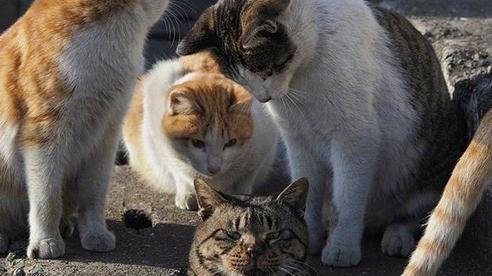 Thấy đồng bọn không may bị lọt cống, bầy mèo hoang có hành động phũ phàng khiến dân mạng cười ngả nghiêng