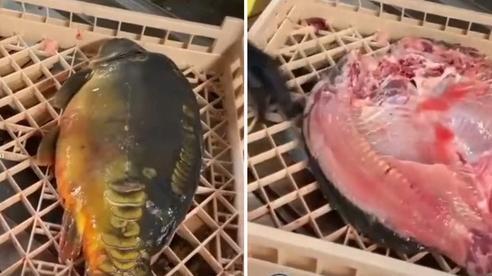 Chú cá bị mổ thành 2 vẫn cố gắng quẫy để giữ lại hình dáng ban đầu khiến người xem vừa buồn cười vừa thương