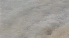 Khoảnh khắc kinh hoàng cá mập áp sát bé gái đang tắm biển
