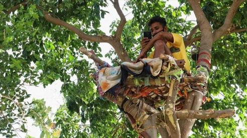 Thiếu hụt cơ sở y tế, chàng trai Ấn Độ trèo trên cây để cách ly sau khi biết mình nhiễm COVID-19
