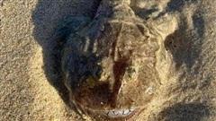 'Thủy quái' có gương mặt cười nhăn nhở dạt vào bờ biển, người dân đăng đàn tìm info vì 'bộ nhá' xấu đến phát hờn