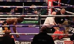 """Võ sĩ quỳ gối """"ăn năn"""" sau khi đấm knock-out đối thủ"""