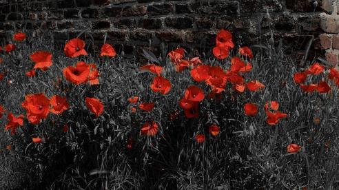Gia chủ biến mất nhiều năm, sân nhà chợt mọc lên vườn hoa lạ, cảnh sát kiểm tra liền 'vén màn' sự thật hãi hùng