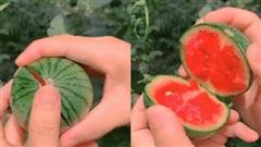 Trái dưa hấu kích thước mini chỉ cần lấy tay cạy khẽ là vỡ đôi, nhưng phần ruột bên trong mới khiến người xem 'ướt mắt'