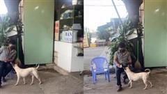 Chú chó có khả năng 'làm thu ngân', giúp chủ kinh doanh trong mùa dịch khiến dân mạng phát cuồng trên mạng xã hội