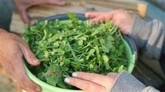 4 cách ăn rau muống nguy hiểm cần tránh nếu không muốn bị tiêu chảy, nôn mửa, thậm chí là nhiễm độc kim loại nặng