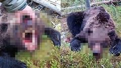 Dẫn đường cho du khách khám phá rừng, thiếu niên 16 tuổi không toàn mạng trở về khi đối đầu với con gấu hung tợn