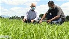 Đà Nẵng hướng đến sản xuất nông nghiệp hữu cơ