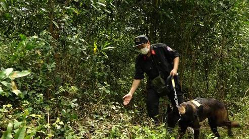 Khởi tố, truy nã gã con rể nghi sát hại mẹ vợ rồi bỏ trốn