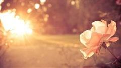 Ca khúc ngày mới: Những điều nhỏ nhoi; Chờ một người đến bao giờ