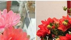 5 loại cây, hoa 'phá tan' phong thủy, gia chủ không nên đặt trong nhà